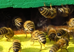 Wiosenne seminarium pszczelarskie zalecenia na miesiąc kwiecień
