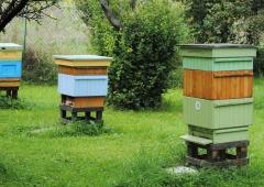 Z miłości do pszczół