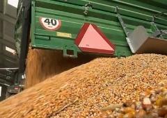 Nowelizacja ustawy o paszach (GMO)