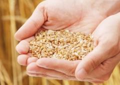 Kontrole w gospodarstwach – Minister Rolnictwa wyjaśnia