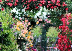 Ogród sprzyjający naturze