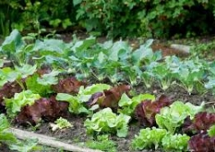 Wszystko o uprawie warzyw - szkolenie w Czerwionce-Leszczynach