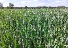 Monitorowanie i prognozowanie agrofagów w uprawach rolniczych