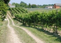 Seminarium wyjazdowe dla rolników powiatu raciborskiego do Sandomierza.