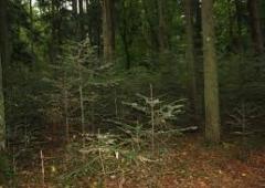 """Ostoja """"Lemańskie Jodły"""" jako obszar Natura 2000."""