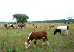 Forum Rolnicze Podbeskidzia