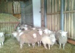"""Relacja ze szkolenia nt. """"Higiena, bioasekuracja i dobrostan w gospodarstwach rolnych jako alternatywy dla stosowania antybiotyków u zwierząt."""