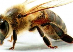 Lutowe zalecenia psczelarskie