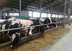 Skala produkcji zwierzęcej w gospodarstwie-program azotanowy