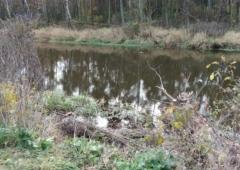Ochrona wód przed zanieczyszczeniami ze źródeł rolniczych - Dyrektywa azotanowa